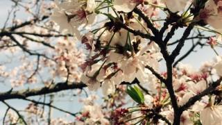 保育園の別れと出会いの春