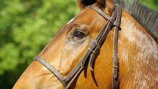 先生の注意。4歳、男の子には「馬の耳に念仏」?