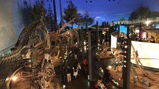 子連れ旅〜あこがれの福井県立恐竜博物館